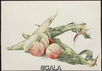 Demuth, Charles (1883-1935) Corn and Peaches, 1929