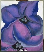 O'Keeffe, Georgia (1887-1986) Petunie color porpora, 1925