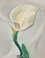 O'Keeffe, Georgia (1887-1986) Calla Lily Turned Away, 1923