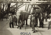 ******** Visite à la Tour Eiffel le 4 Juillet 1948: L'éléphant Bouglione au 1er étage de la Tour, 4 Juillet 1948. Positif monochrome sur support papier, m. 0.061 x 0.087. Inv.: PHO1981-134-1. Photographer: anonyme (Image: Alexis Brandt)