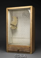 Cornell, Joseph (1903-1972) Cockatoo: Keepsake Parakeet, 1949-1953