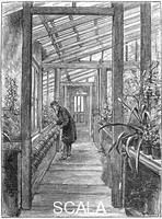 ******** Charles Darwin (1809-1882), English naturalist, in his greenhouse.
