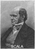 ******** Charles Darwin, English naturalist, 1884.